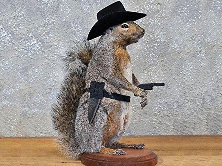 cnet squirrel taxidermy