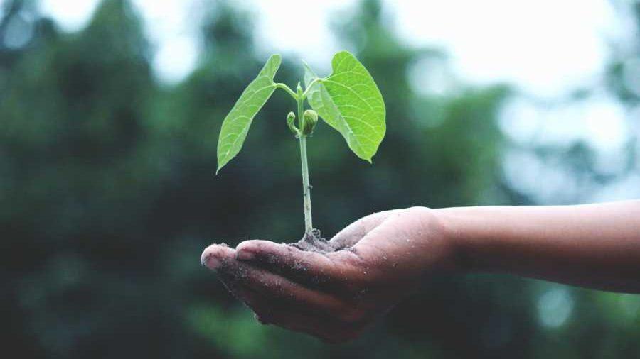 person holding a green plant 1072824 e1588150474833